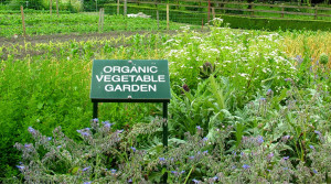 2-organic-garden